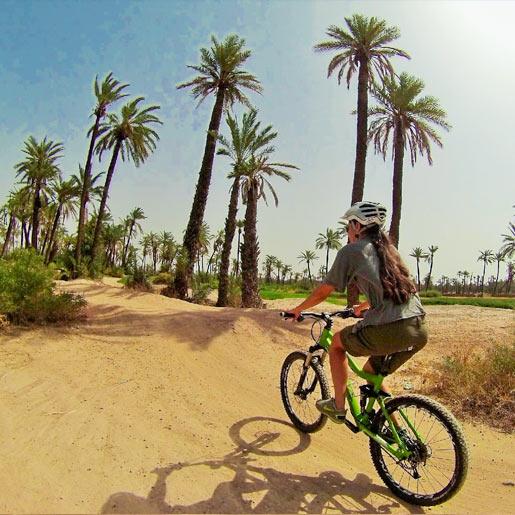 Two-wheeled excursion in the Palm grove