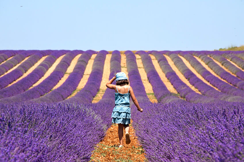 Provence and Île de Ré: in the heart of the 2 most stunning regions in France